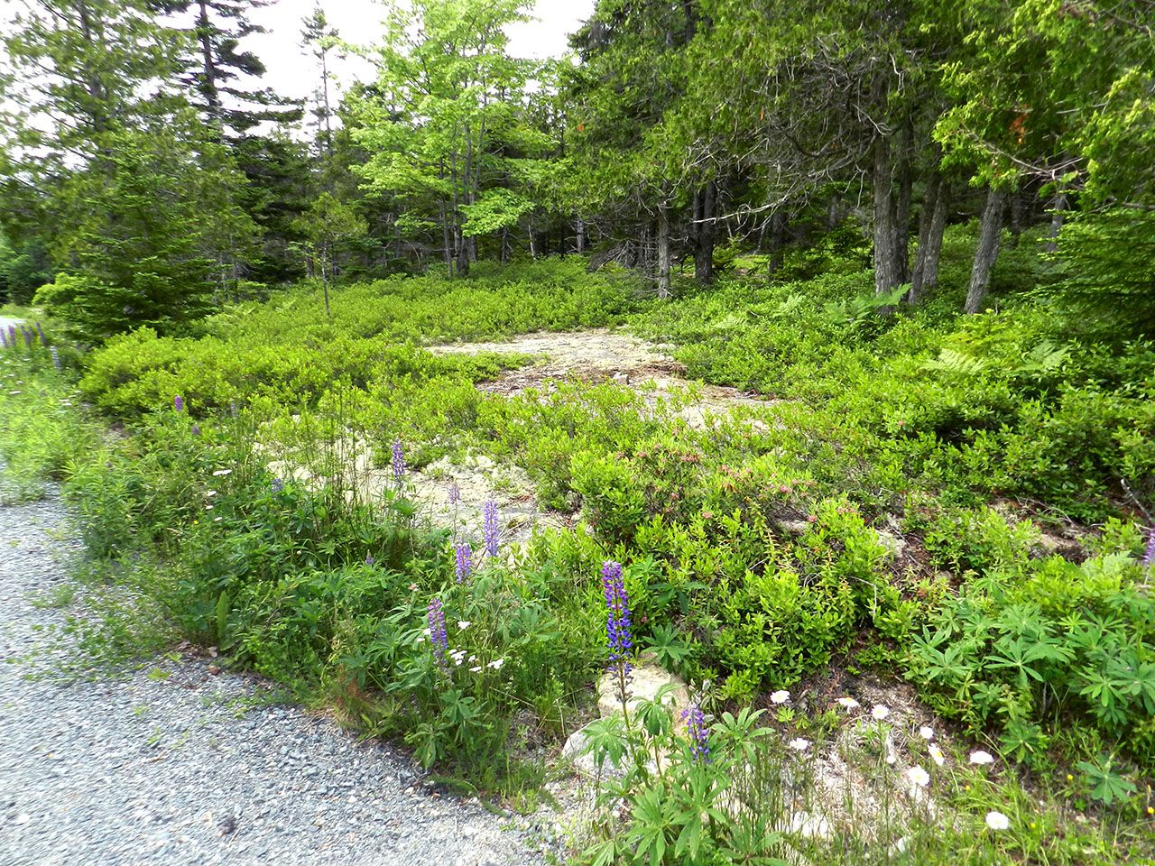 Additional photo for property listing at Birch Brook at Seal Harbor Rock Garden Mount Desert, Maine,04675 United States