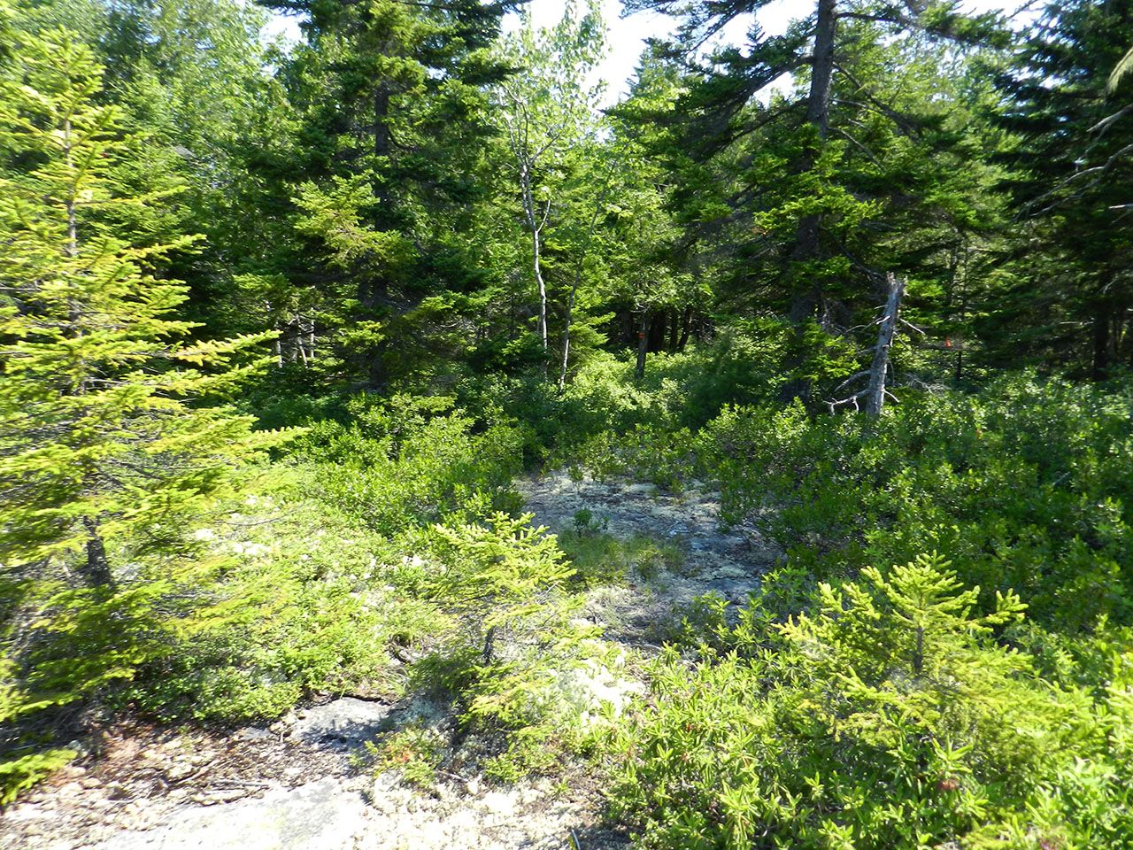 Additional photo for property listing at Birch Brook at Seal Harbor Rock Garden Mount Desert, Maine,04675 Estados Unidos