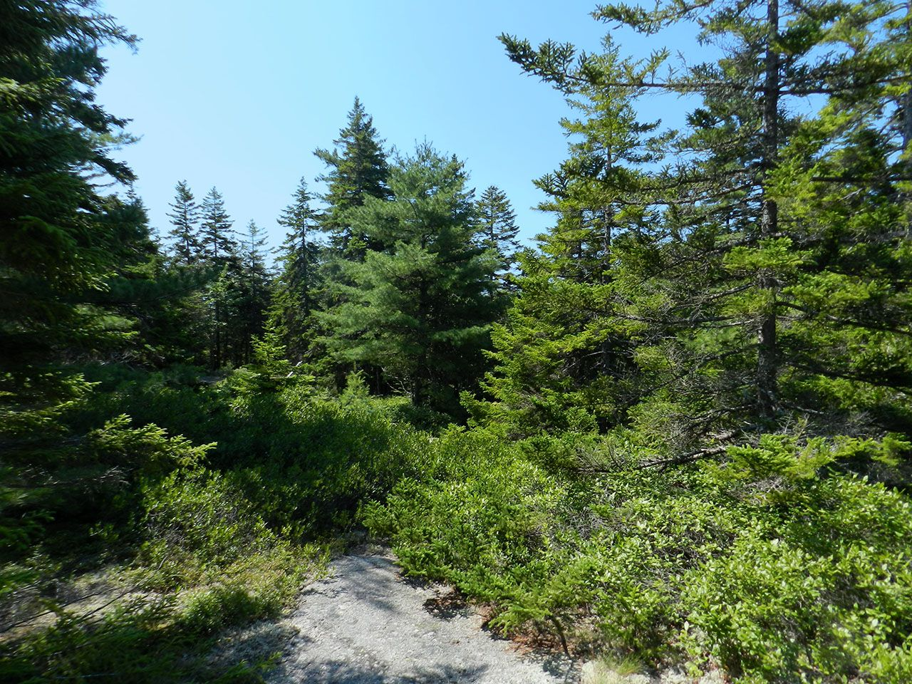 Additional photo for property listing at Birch Brook at Seal Harbor Rock Garden Way Mount Desert, Maine,04675 Estados Unidos