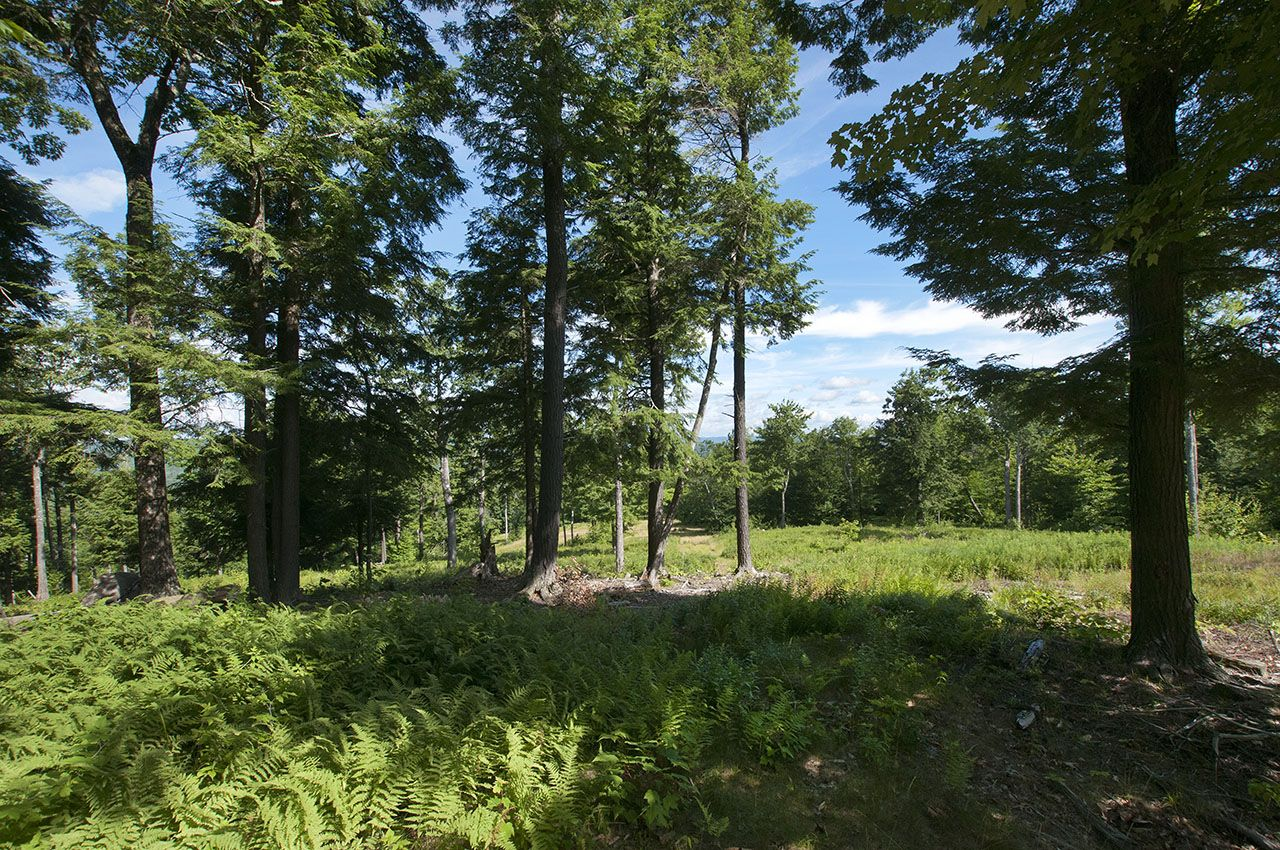 Additional photo for property listing at StoneyBrook Farm 1146 Route 114 Sutton, Нью-Гэмпшир,03260 Соединенные Штаты