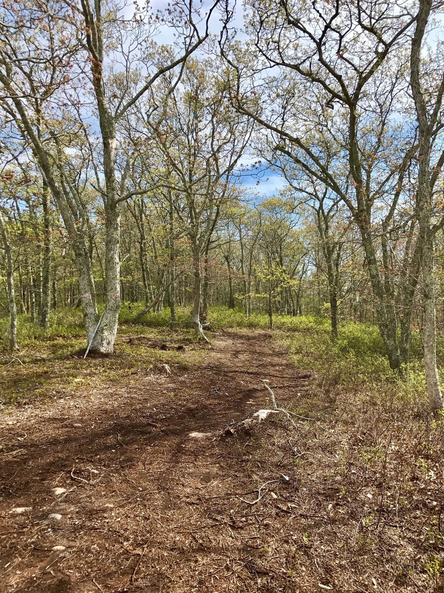 Additional photo for property listing at 42 Fire Tower Road 42 Fire Tower Road West Tisbury, Massachusetts,02575 United States